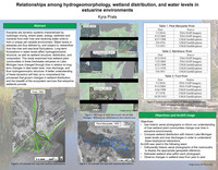 Relationships among hydrogeomorphology, wetland distribution, and water levels in estuarine environments