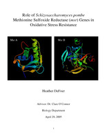 Role of Schizosaccharomyces pombe Methionine Sulfoxide Reductase (msr) Genes in Oxidative Stress Resistance