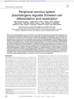 Peripheral nervous system plasmalogens regulate Schwann cell differentiation and myelination